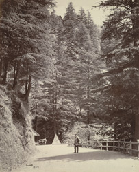The Mall. The Bowlee near 'Glenarm', Simla